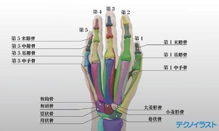 学術的な美しい解剖図、メディカルイラスト、断面図などを制作いたします。