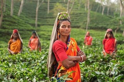 インドに関する産業記事を執筆します!