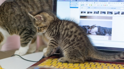 猫の手も借りたい!事務サポートサービス