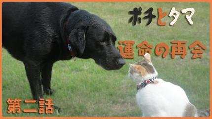 動画編集代行【料金要相談】