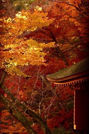 奈良県民ならではの自然景観の写真を撮影します。