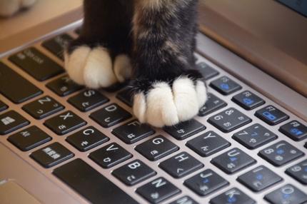 パソコン作業、猫の手貸します。1時間:2500円(手数料込)