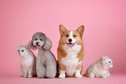 犬・猫などのペットを中心とした動物記事を作成します!!!