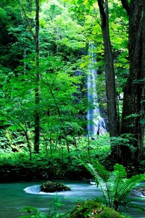 森林保護PRナレーション