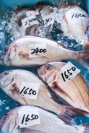 海釣りに関しての知識を1000文字程度で記入します