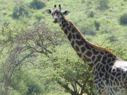 アフリカでサファリ体験、お勧めコースと注意点