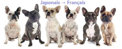 フランス語ネイティブによる日仏翻訳、ネイティブチェック
