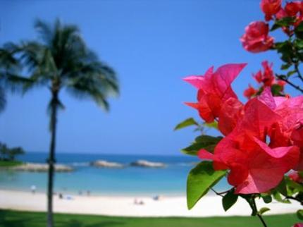 ハワイでの会社設立手続きを代行します