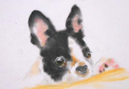 可愛くてちょっとだけリアルな動物イラスト描きます