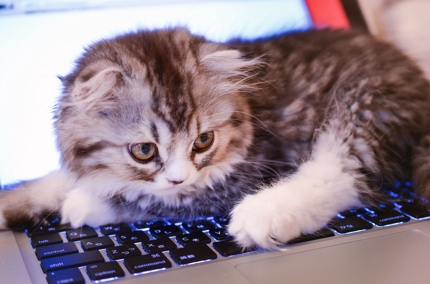 HTML/CSSコーディング PC&SP対応