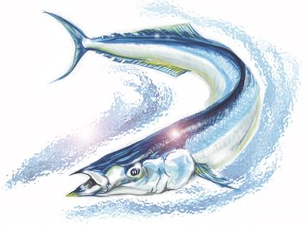 魚介類イラスト