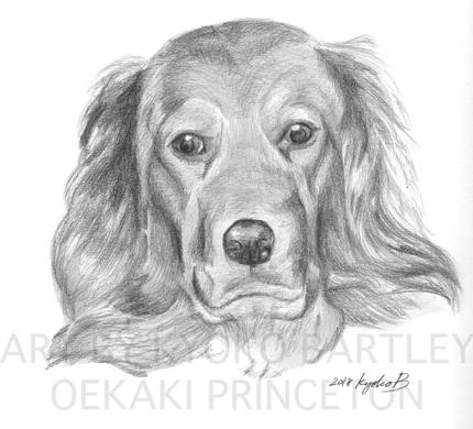 写真から精密描写イラスト!大事なペットやお気に入りの動物をお描きします