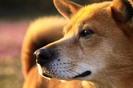 犬・猫などペットの出張写真撮影