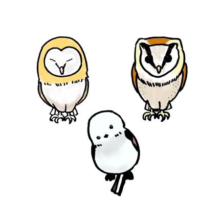 可愛い鳥のイラスト制作