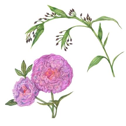植物画制作(写実的・リアル)のご依頼
