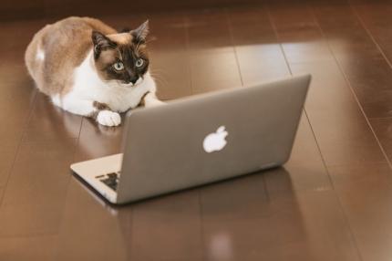 HTML・CSSで作られたWebサイトをWordPressのテーマ化します