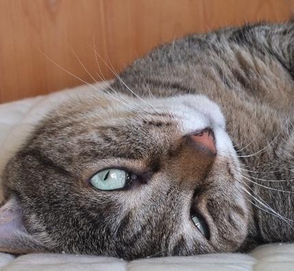 猫の飼い方に関するライティング