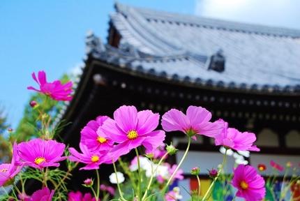 奈良の神社仏閣と季節の花(記事と写真2枚セット)