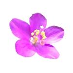 ネイル用シールの押し花のイラストへの提案