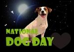【#はじめてのアドビ 申込者専用コンペ】フォトショップでつくろう!世界犬の日記念写真への提案