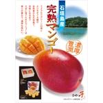 kazu78さんの石垣島産完熟マンゴーを紹介するポスター制作への提案