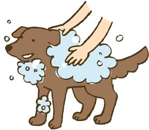 yujind0さんのペット(犬)をシャンプーしているイラスト作成への提案
