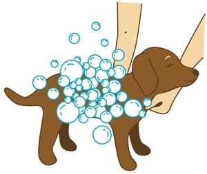 yuki-mbさんのペット(犬)をシャンプーしているイラスト作成への提案