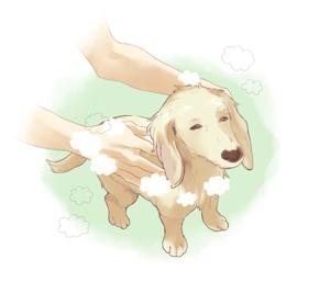 mk_nk_39さんのペット(犬)をシャンプーしているイラスト作成への提案