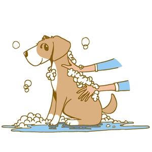 quailさんのペット(犬)をシャンプーしているイラスト作成への提案