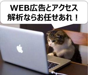 吉岡辰志【WEB広告/SEO/アクセス解析】