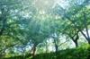 ForestWorks
