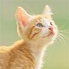 catlancer