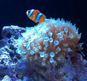 aquarium.tbt