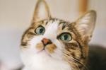 kotone__cat