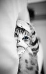 _whitecat_22