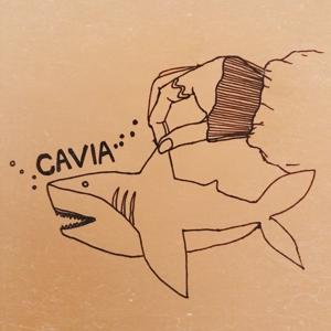 cavia303