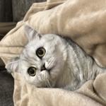 ミャオママ (miaou_0702)