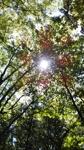 happy-leaf