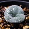 Plantsphilia
