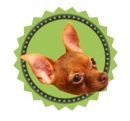 web planning office「MiraclePuppy!」