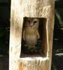 hayashi bird
