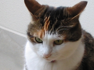 (資)猫のマドリガル