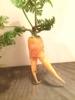 organic_farm