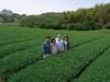梅野製茶園