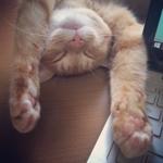 ライター猫珠深鈴 (mooglemoogly)