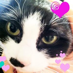love_cat_1023