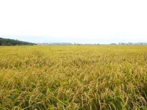 米農家TOMO