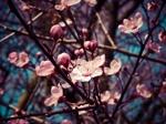 dot-flower