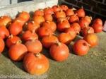 ポメス (Pommes)