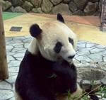 Panda works